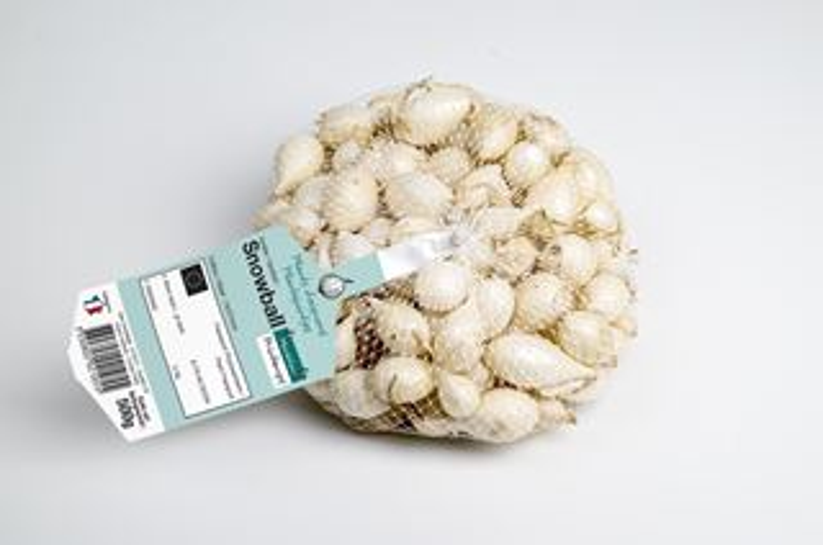 Plantajuin-Snowball-Wit-netje-500gr-14-21mm