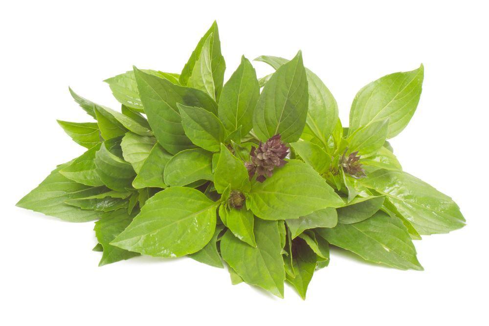 Plantenfiche-Ocimum-basilicum-Siam-Queen-Thaise-basilicum-