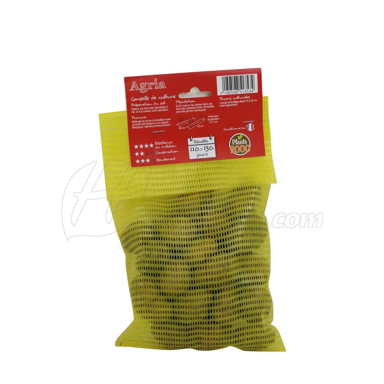 Pootaardappel-Agria-doosje-25-stuks-BIO-28-35-Nederland-