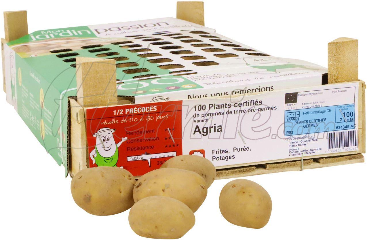 Pootaardappel-Agria-kistje-100-stuks-28-35-Frankrijk-
