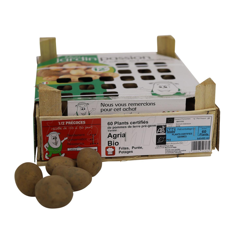 Pootaardappel-Agria-kistje-60-stuks-BIO-28-35-Nederland-
