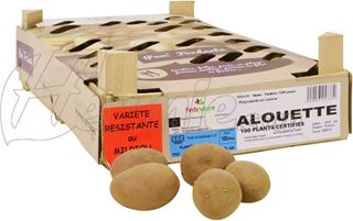 Pootaardappel-Alouette-kistje-100-stuks-plaagresistent-ECO