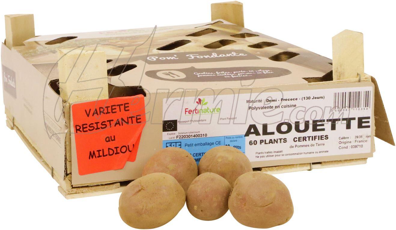 Pootaardappel-Alouette-kistje-60-stuks-plaagresistent-ECO