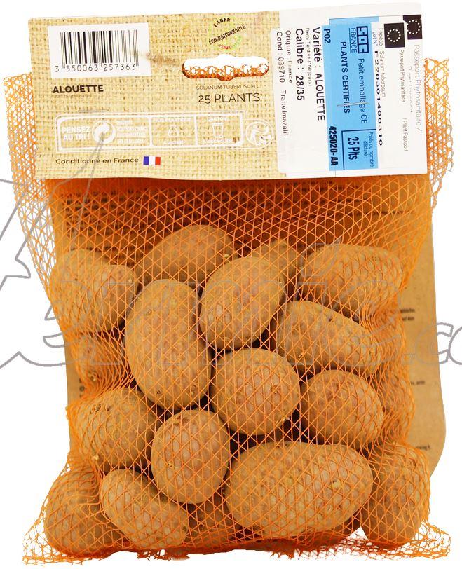 Pootaardappel-Alouette-zakje-25-stuks-plaagresistent-ECO