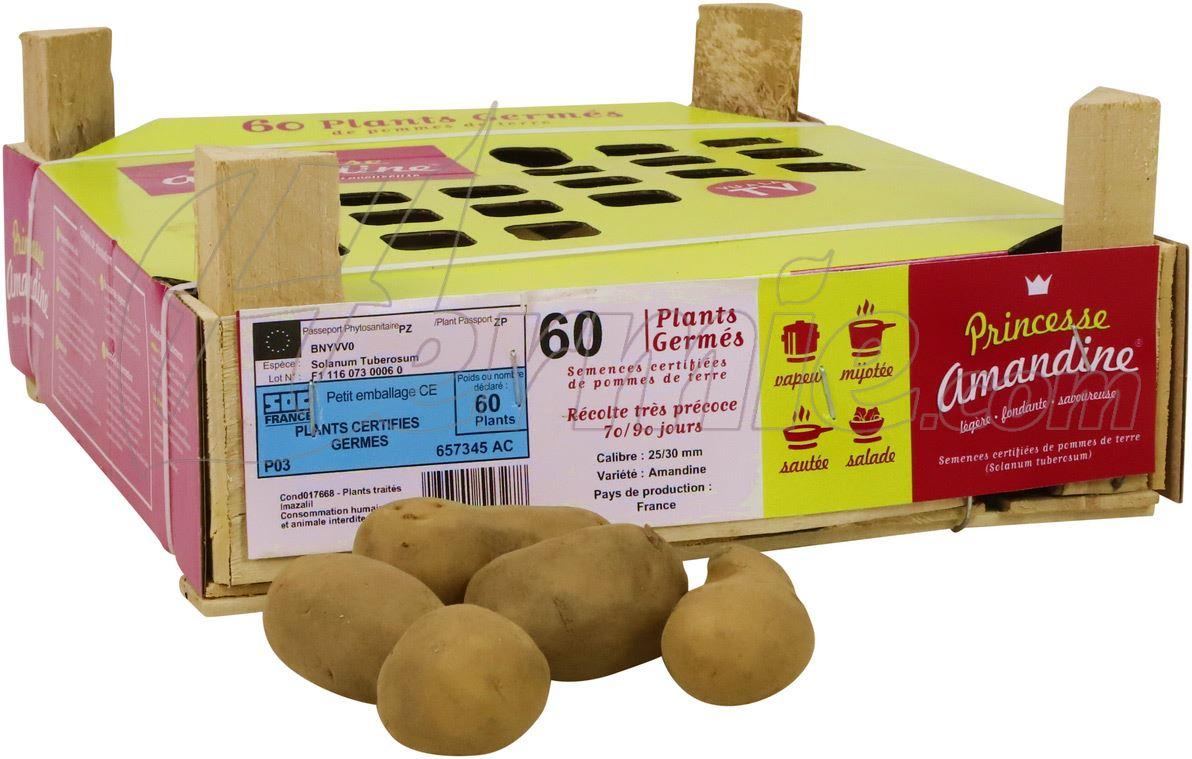 Pootaardappel-Amandine-kistje-60-stuks-25-30-Frankrijk-