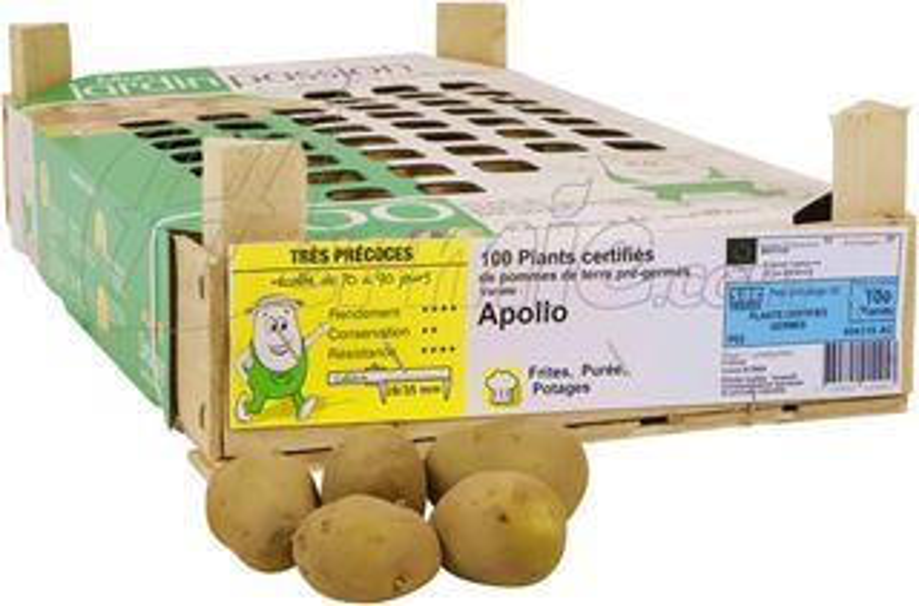 Pootaardappel-Apollo-kistje-100-stuks-28-35-Frankrijk-