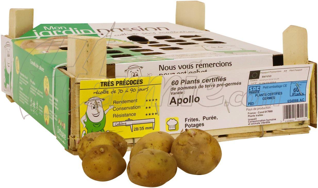Pootaardappel-Apollo-kistje-60-stuks-28-35-Frankrijk-