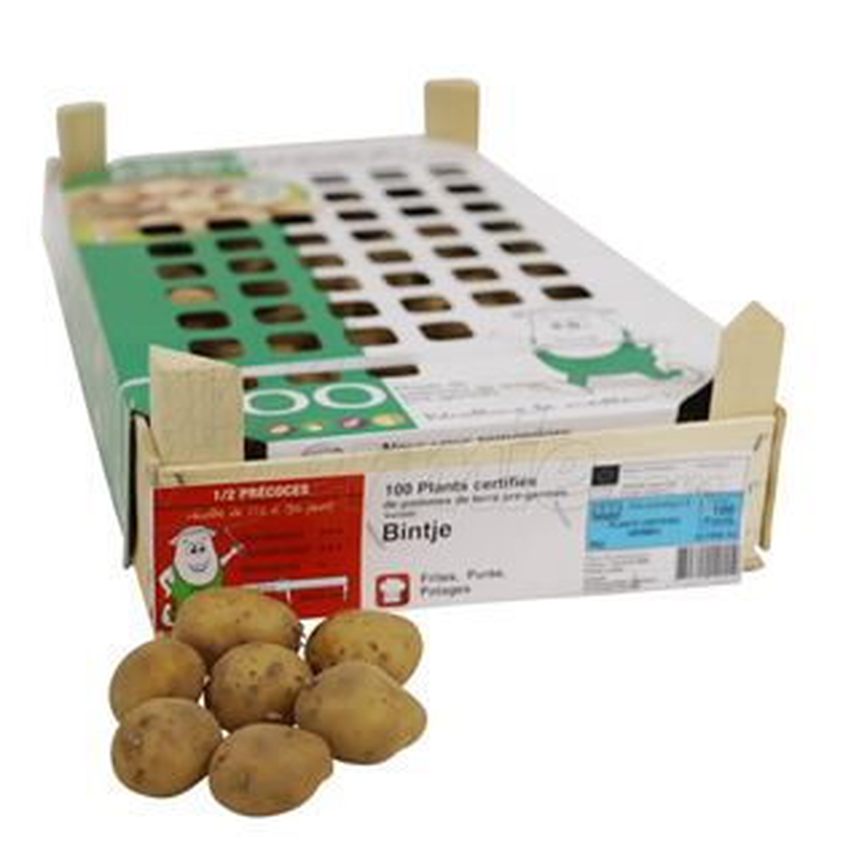Pootaardappel-Bintje-kistje-100-stuks-28-35-Frankrijk-
