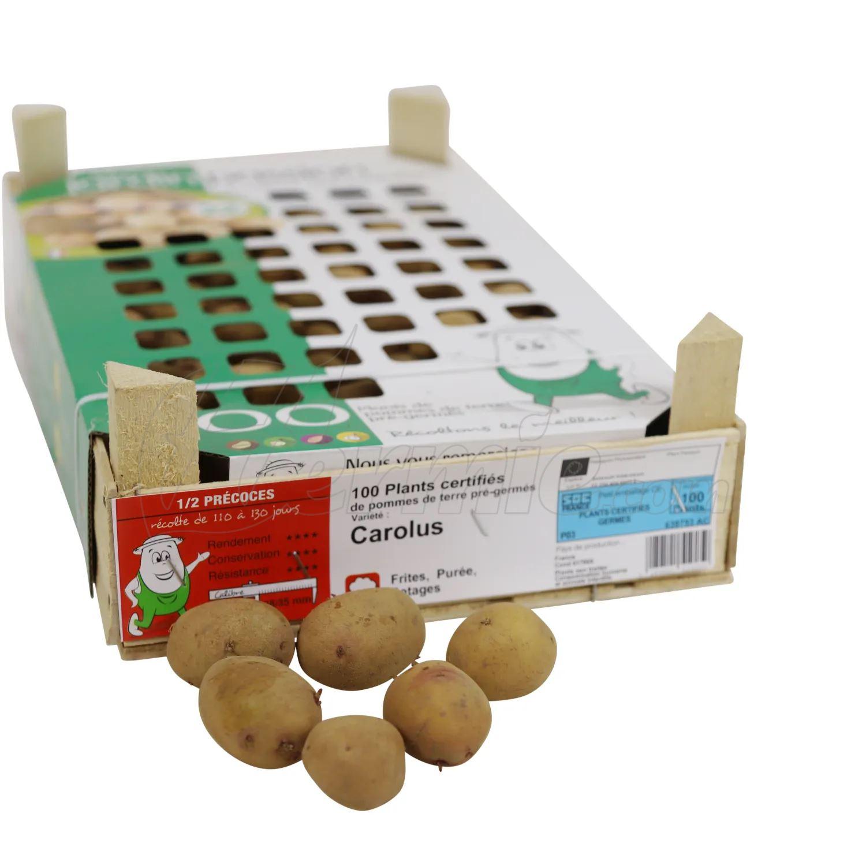 Pootaardappel-Carolus-kistje-100-stuks-plaagresistent-ECO-28-35-Frankrijk-