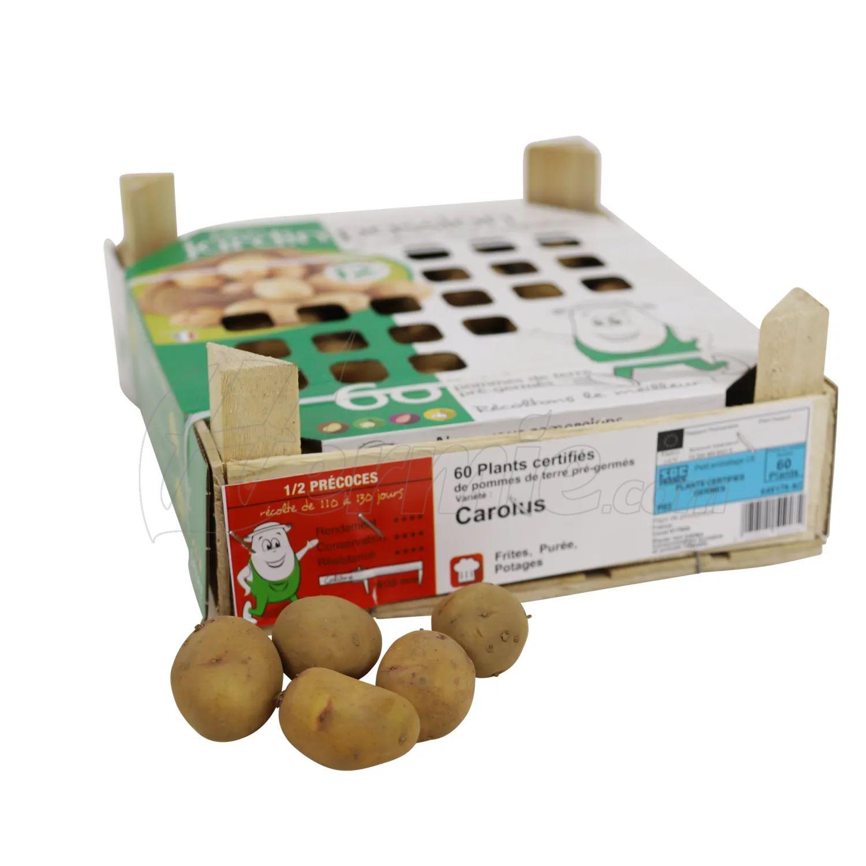 Pootaardappel-Carolus-kistje-60-stuks-plaagresistent-ECO-28-35-Frankrijk-