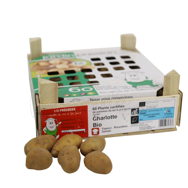Pootaardappel-Charlotte-kistje-60-stuks-BIO-25-32-Frankrijk-