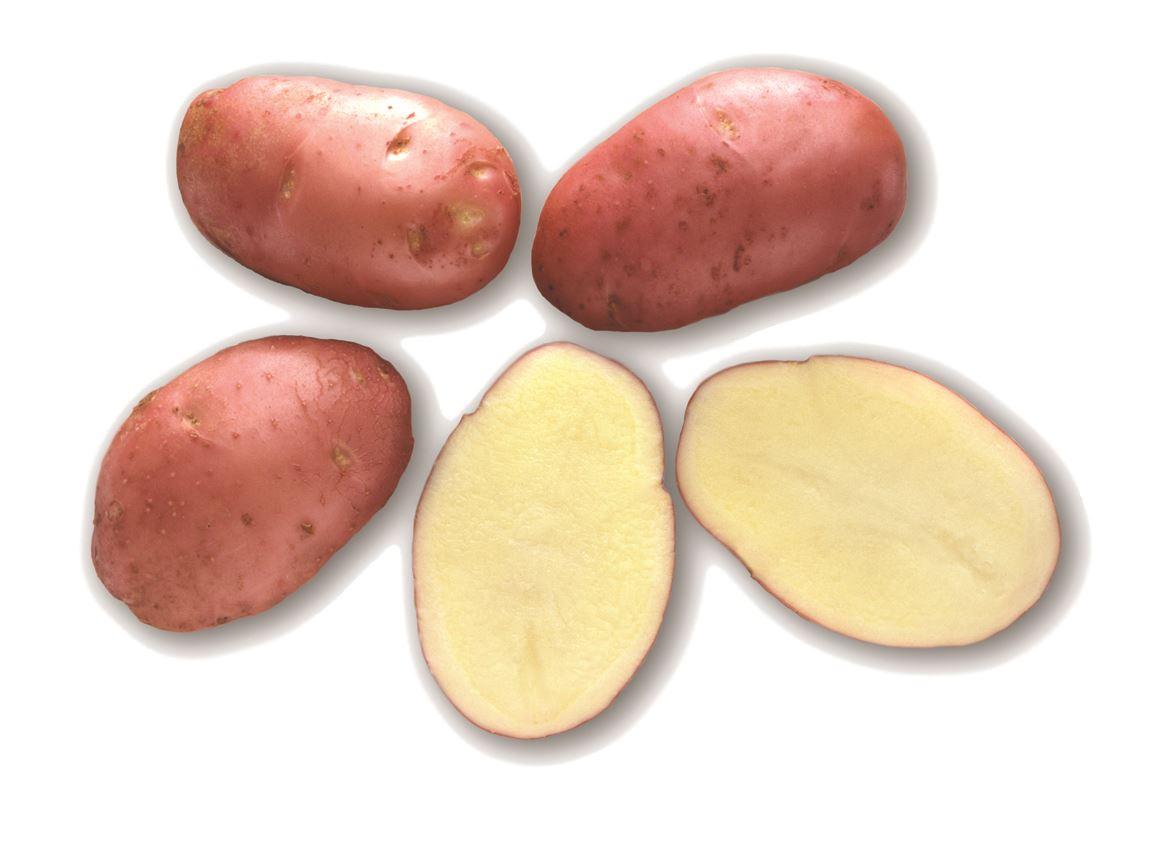 Pootaardappel-Desiree-zakje-1kg-28-35-Nederland-