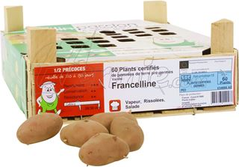 Pootaardappel-Franceline-kistje-60-stuks-rood-28-30-Frankrijk-