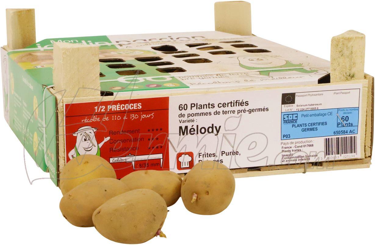 Pootaardappel-Melody-kistje-60-stuks-28-35-Frankrijk-