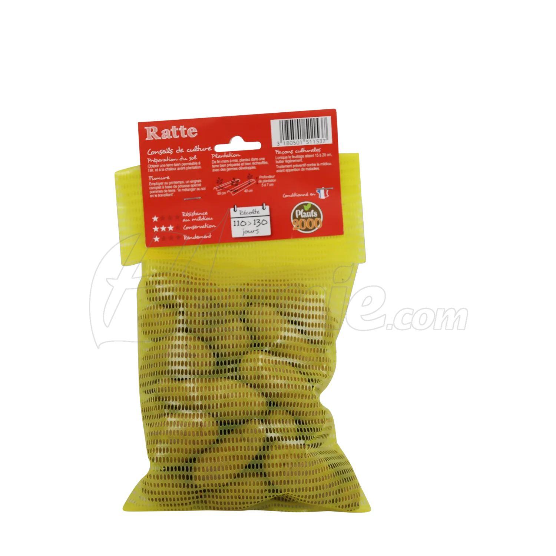 Pootaardappel-Ratte-doosje-25-stuks-25-32-Frankrijk-