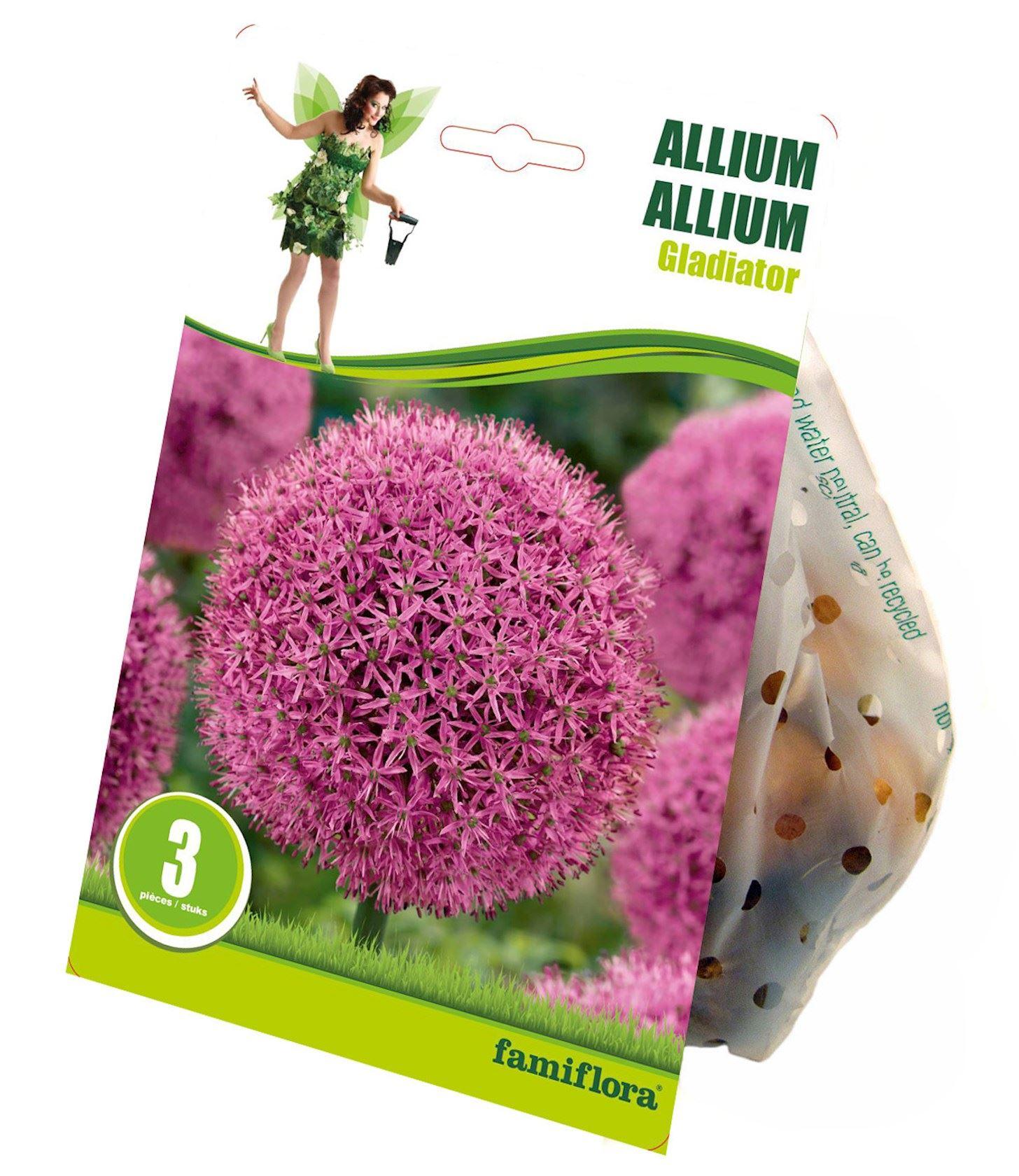 Allium 'gladiator' 3 st. 16/18