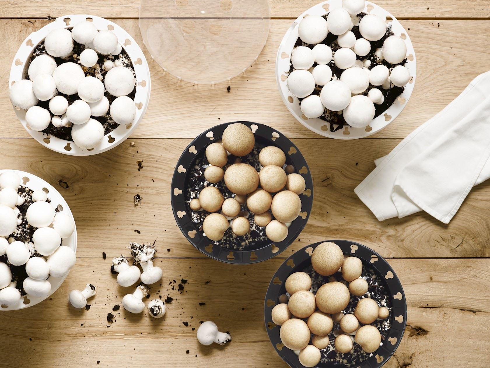 champignons-Archi-Duc-bruin-kit