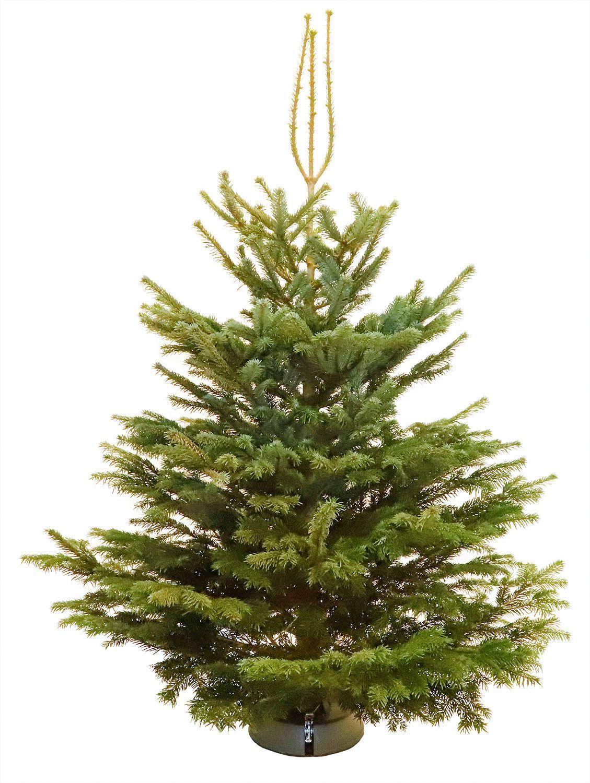 Echte-levende-kerstboom-Nordmann-200-250-cm-gezaagd-AA-kwaliteit