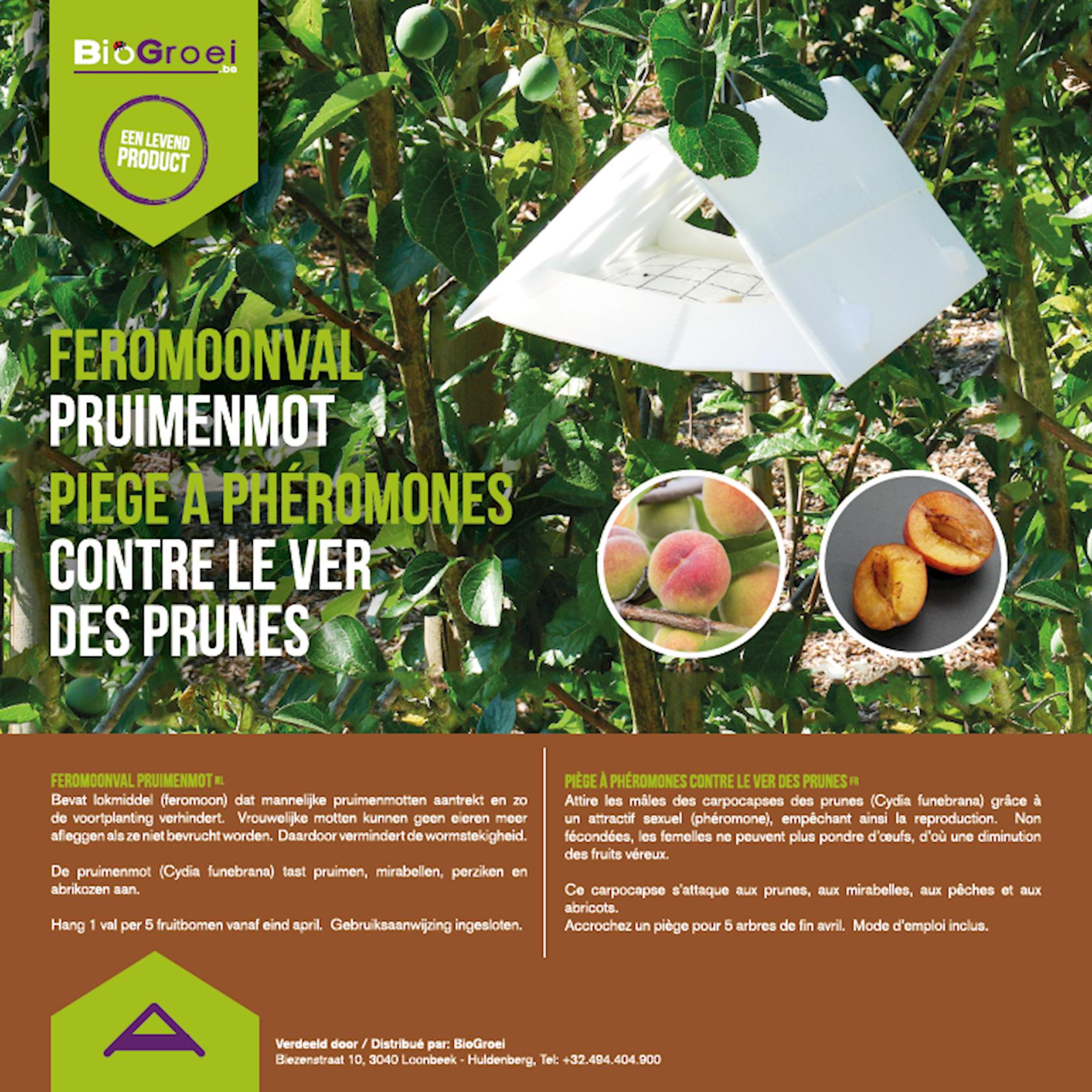 Feromoonval tegen pruimenmot + 2 feromooncapsules