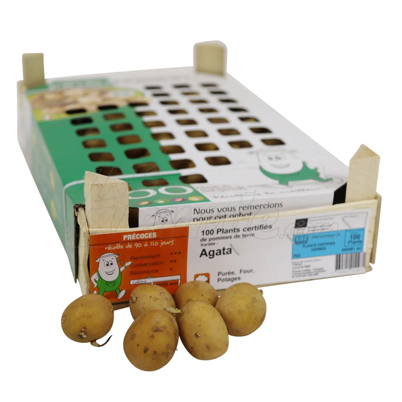 Pootaardappel-Agata-kistje-100-stuks-28-35-Frankrijk-