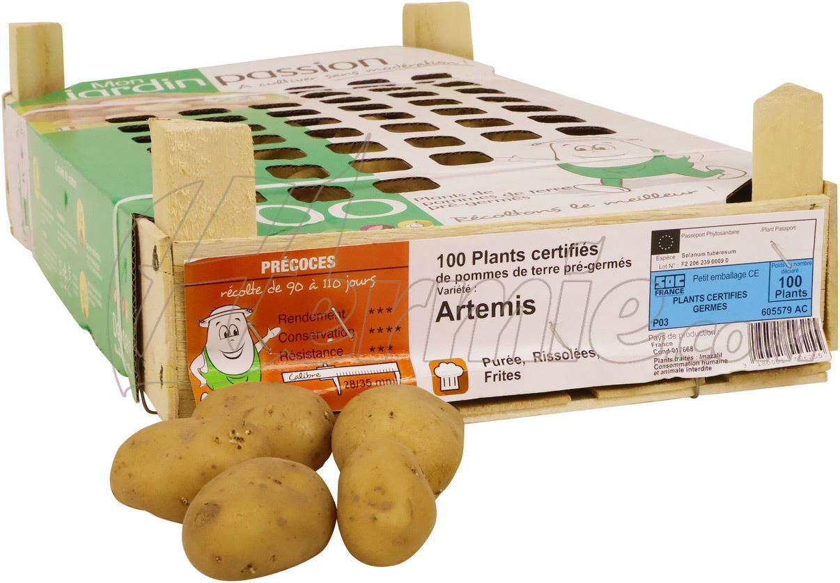 Pootaardappel-Artemis-kistje-100-stuks-28-35-Frankrijk-