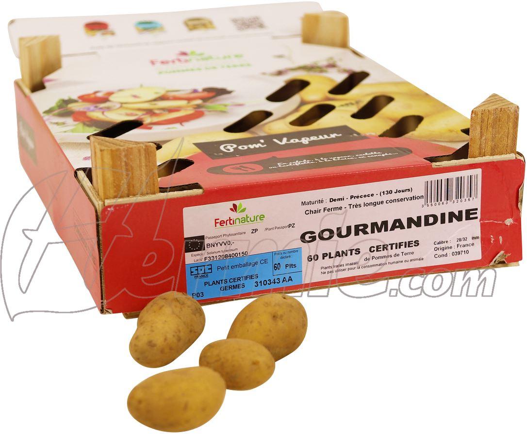 Pootaardappel Gourmandine kistje 60 stuks  - plaagresistent ECO