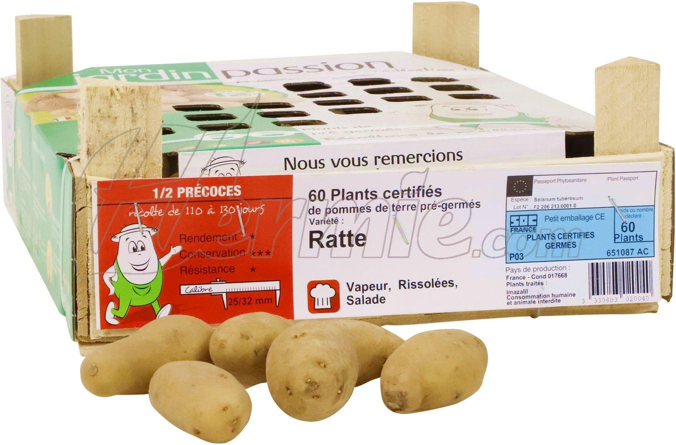Pootaardappel Ratte kistje 60 stuks - 25/32 (Frankrijk)