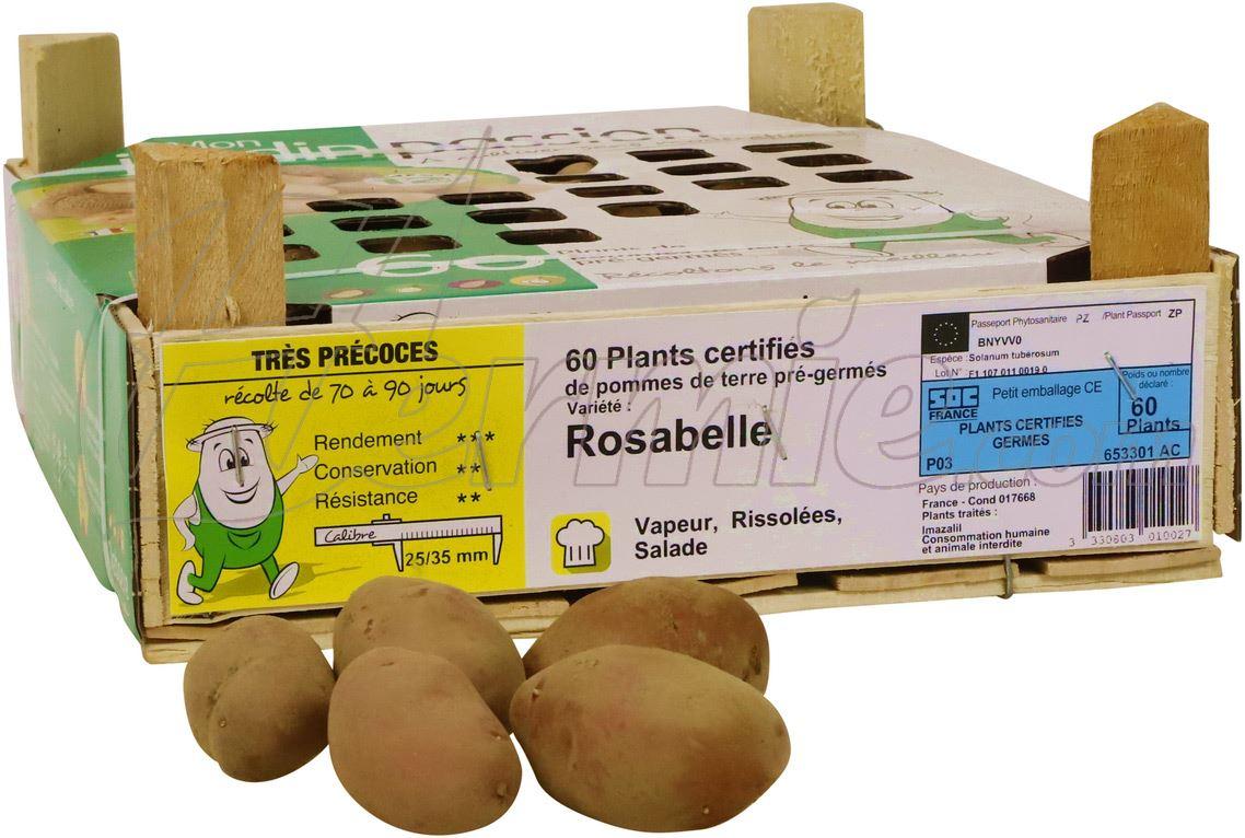 Pootaardappel Rosabelle kistje 60 stuks - rood 25/35 (Frankrijk)