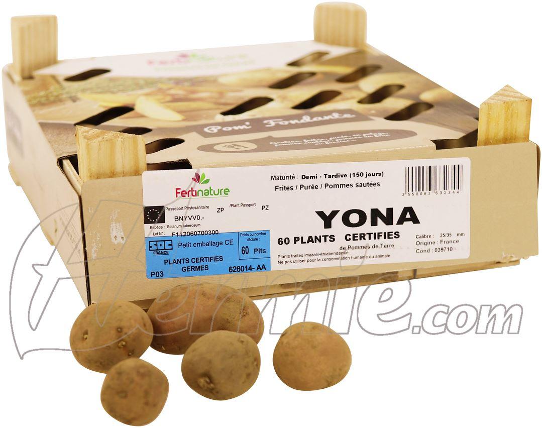 Pootaardappel Yona kistje 60 stuks - rood- plaagresistent ECO