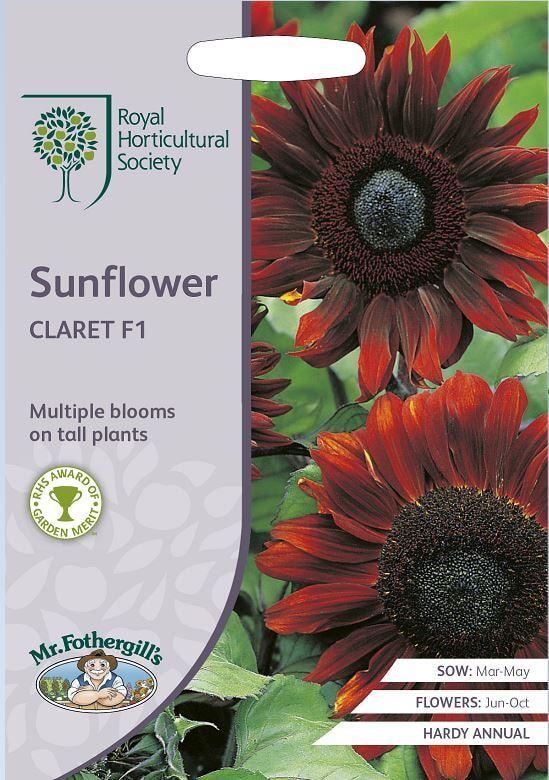 RHS Zonnebloem, Sunflower Claret F1