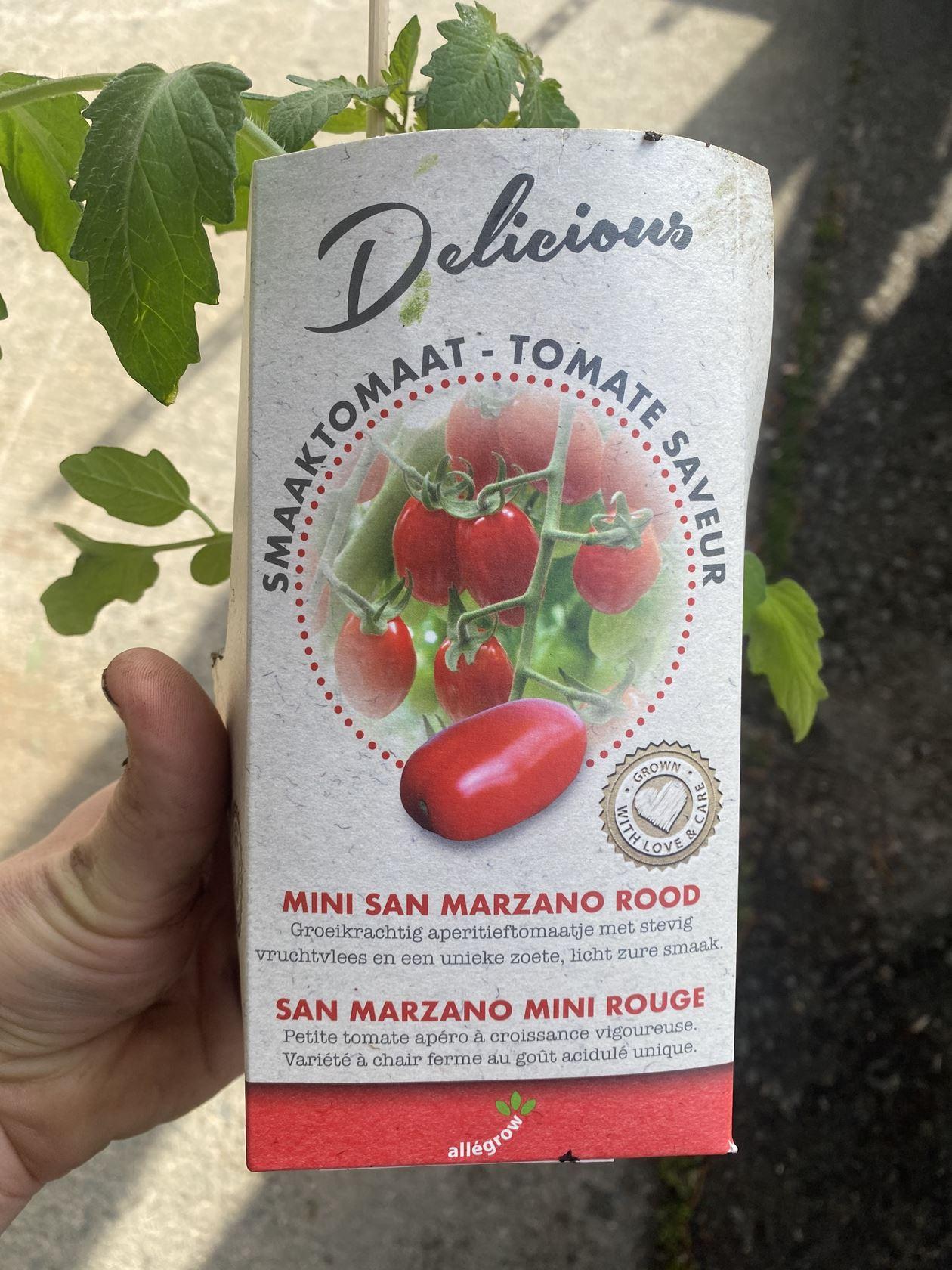 Tomaat San Marzano mini 10cm persblok