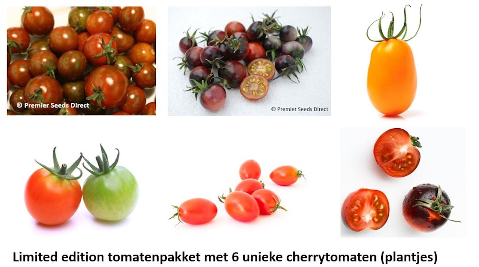 Tuindagen Beervelde uniek cherrytomaten pakket (6 soorten kerstomaten)
