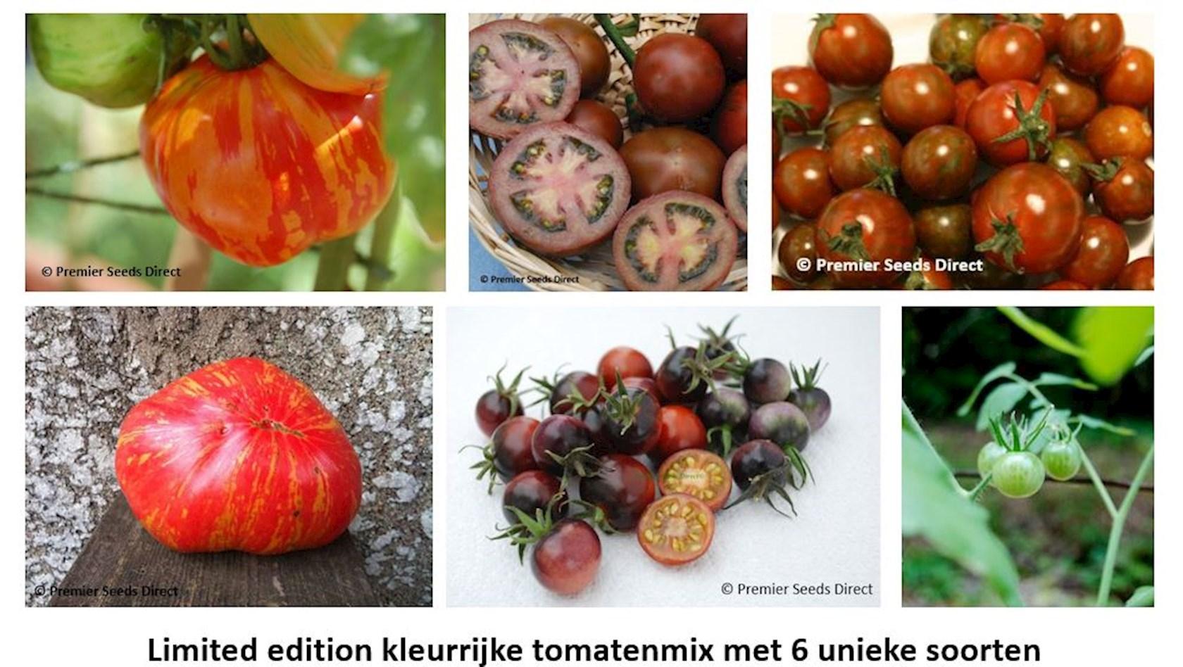 Tuindagen Beervelde unieke kleurrijke tomatenmix pakket (6 tomatenvariëteiten)