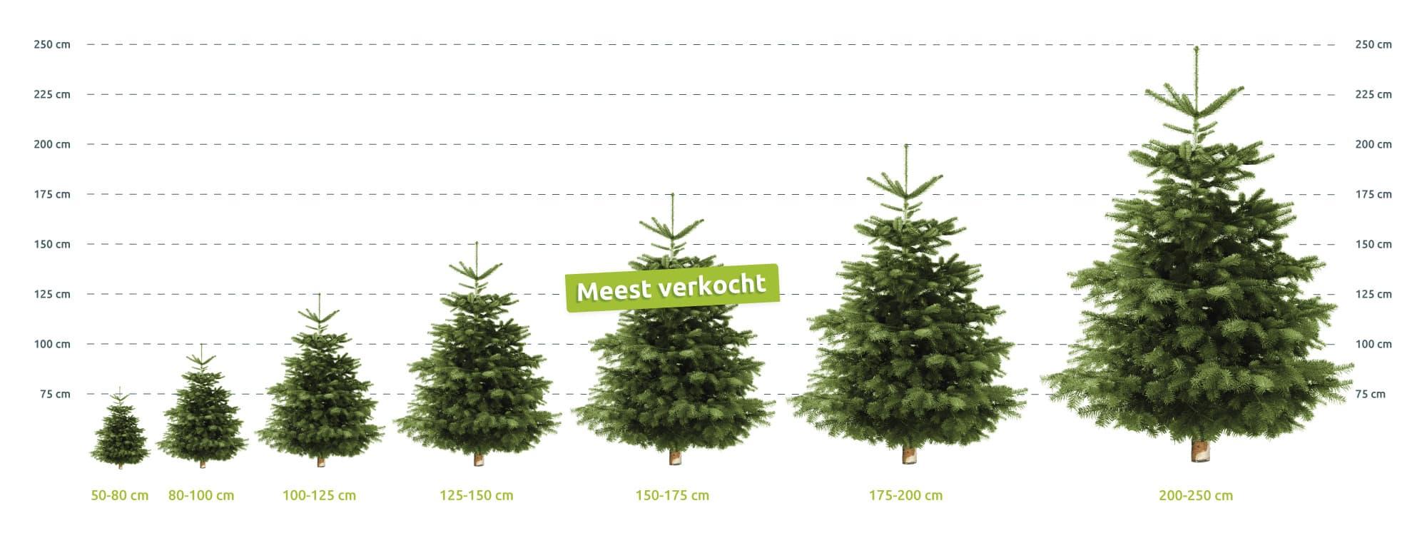 echte levende Nordmann Kerstbomen formaten afmetingen Hermie online webshop