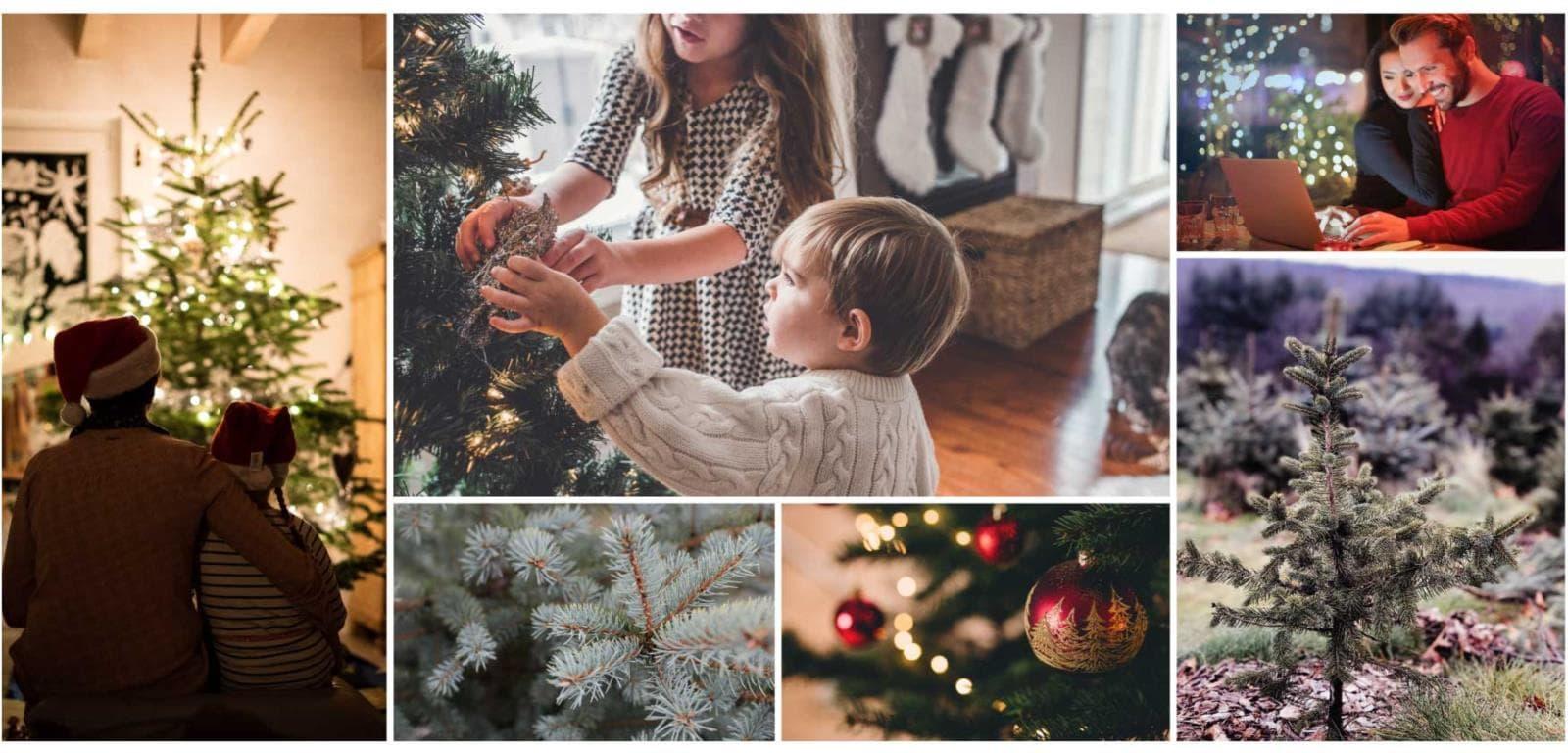 hermie levende echte nordmann kerstbomen sfeerbeelden gezellig kerst vieren