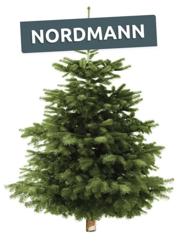 Nordmann echte levende kerstboom online kopen bij Hermie