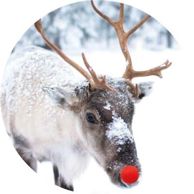 referentie hermie echte levende kerstbomen nordmann rudolph