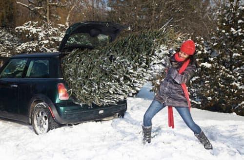 nooit meer sleuren met de kerstboom dankzij levering van hermie online